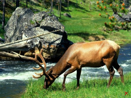 Природа Yellowstone National Park, Wyoming — 21 фото