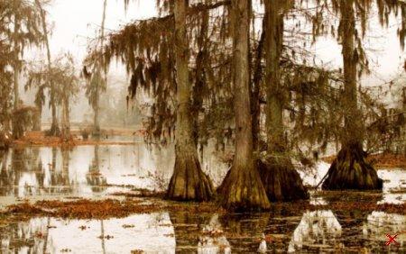 Болото Манчак в Луизиане