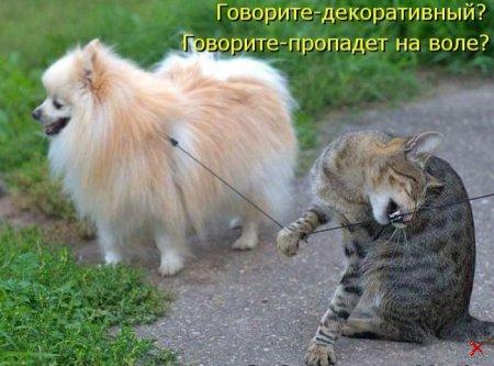 ПРИКОЛЬНЫЕ ФОТО С КОТАМИ (Читать!!!)