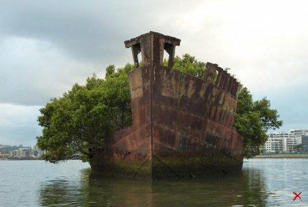 Обломки корабля Эйрфилд в заливе Хомбуш, Австралия