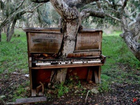 Дерево-фортепиано, Монтерей, Калифорния